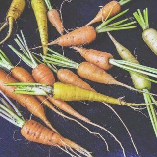 🥕 Chaque mois, nous vous proposons une liste des fruits et légumes de saison, pour retrouver le goût des choses tout en respectant le rythme de la nature. Découvrez les fruits et légumes du mois de janvier. Lien dans la bio. . . . #wearegreenfr #5fruitsetlegumesparjour #janvier #biolocal #healthy #beauty #recipes