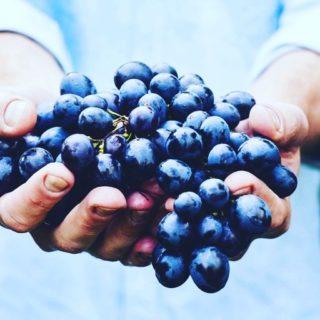 🍇 Chaque mois, nous vous proposons une liste des fruits et légumes de saison, pour retrouver le goût des choses tout en respectant le rythme de la nature. ➡️lien dans la bio. . . . #wearegreenfr #5fruitsetlegumesparjour #healthymeal #equilibre #biolocaldesaison